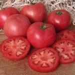 tomaten-fenda