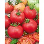 tomaten-malinowy-erdbeertomate