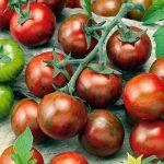 tomaten-zebrino