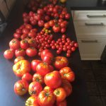 gemuesebau-tomaten-06