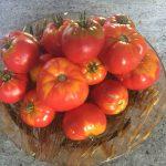 gemuesebau-tomaten-07