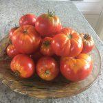 gemuesebau-tomaten-08