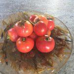 gemuesebau-tomaten-09