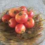 gemuesebau-tomaten-10
