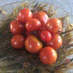 gemuesebau-tomaten-13
