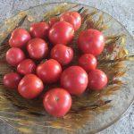 gemuesebau-tomaten-14