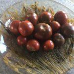 gemuesebau-tomaten-16