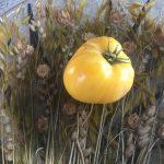 gemuesebau-tomaten-17
